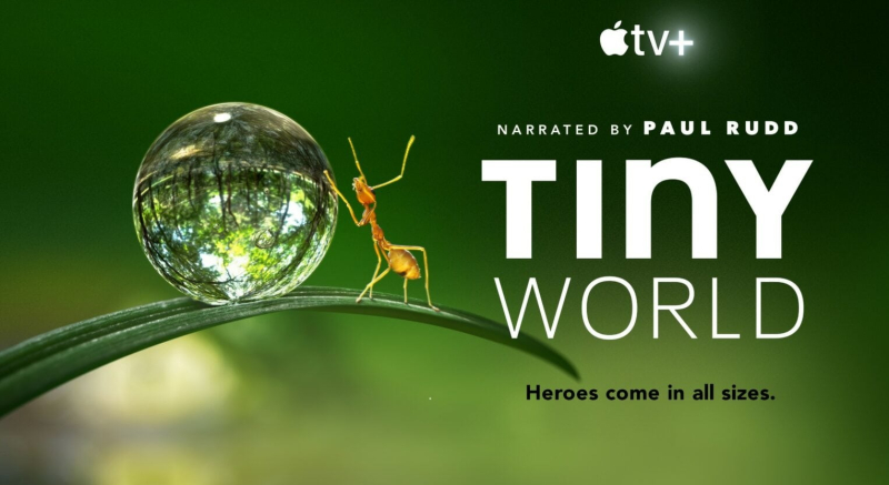 1 X Cover Tiny World